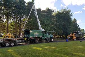 Tree Removal and Land Clearing Services